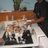 Barkley's Do It Yourself Dog Wash & Professional Groom Spa