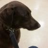 Bloomfield Pointe Veterinary Hospital