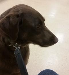 Bloomfield Pointe Veterinary Hospital - Pontiac, MI