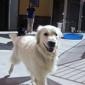 Donner-Truckee Veterinary Hospital - Truckee, CA