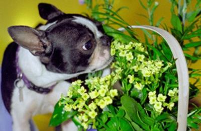 Doggie Du-Rite - Chehalis, WA