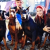 Blue Poodle Pet Salon, Boarding & Day Care