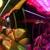 Los Angeles Party Bus