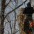 Dormans Tree Cutting & Snow Plowing