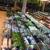 Killian Growers Nursery