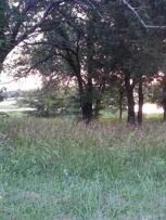 Lake Frances through the trees
