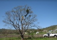 Southern Oregon Tree Care, LLC - Medford, OR. 3