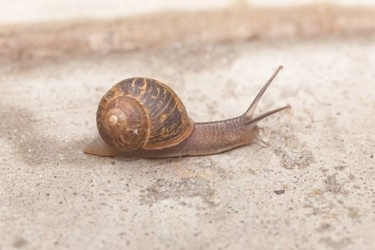 Snails In The Mail