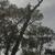Top tho Bottom Tree Service & Stump Grinding