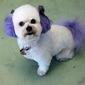 Delightful Doggie Doo's and Kittie Klips Too LLC - Nampa, ID