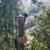 Champion Tree Care