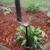 YMS Irrigation Systems (Sprinkler System Repair & Installs) - CLOSED