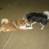 Pawdners Doggie Daycare