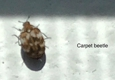 East Cooper Termite And Pest Solutions - Mount Pleasant, SC