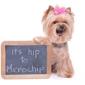 Dogwood Veterinary Hospital - Cape Girardeau, MO