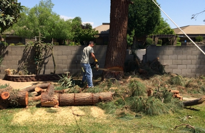 Izz Y Tree T And Removal 2103 N