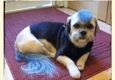 All Fur Pet Grooming - Fredericksburg, VA