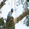 Always Straight Up Tree Service
