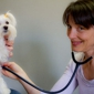 Sunvet Animal Wellness Clinic - Asheville, NC