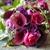 Westport Florist