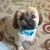 Terri's Canine Design Pet Grooming