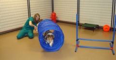 Carefirst Animal Hospital At Wellington - Cary, NC