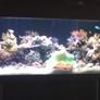 Don Antonio's - Los Angeles, CA. Awesome fish tank