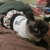 G.B.A. Pet Service LLC