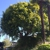 Pacific West Tree Care Inc.