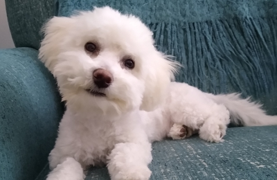 Puppy Den The - Daphne, AL. Ellie Mae