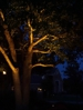Uplight on tree lighting by Dallas Landscape Lighting