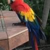 The Bird & Exotic Hospital