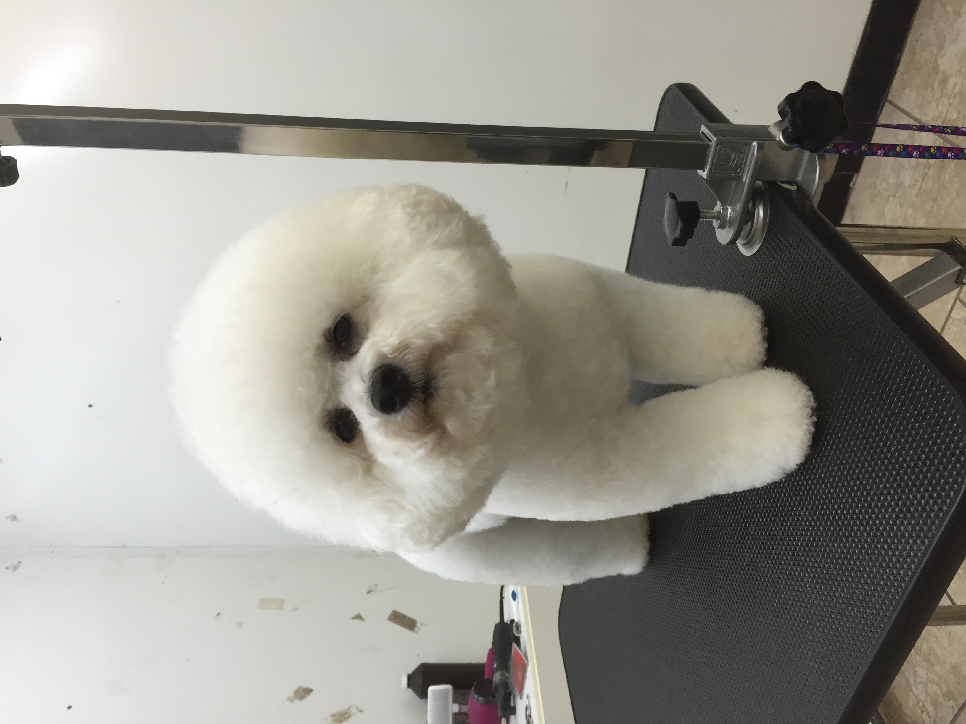 Princess princess dog grooming studio 145 burt rd lexington ky princess princess dog grooming studio 145 burt rd lexington ky 40503 yp solutioingenieria Image collections