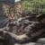 Hallie Hill Animal Sanctuary