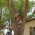 Wallace Tree Service