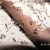 Fogle Termite and Pest