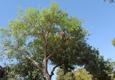 Wild Bills Tree Service - Bountiful, UT