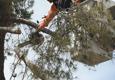 Arborist Standards Tree Care - Cottonwood, AZ. #pinetree #safetreeremoval