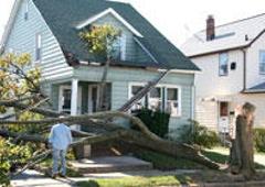Williams A-1 Expert Tree Service - Dowagiac, MI