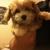 Westchester Puppies