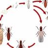 Second Opinion Termite & Pest Control