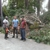 Hampton Roads Tree Service - CLOSED