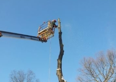 Lewis Burns Tree Service - York, PA