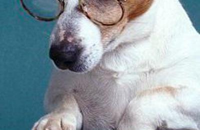 Animal Care Center LLC - Warrenton, VA