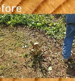 Greenville Stump Grinding - Greer, SC