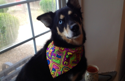 PAWSitive Karma Pet Grooming Salon - Worcester, PA