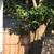 Whitfield Evergreen Tree Service