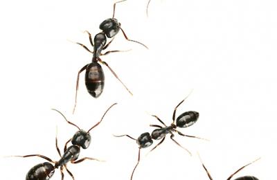 Omega Termite Pest Control 807 75th Ave Oakland Ca 94621 Yp Com