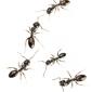 Omega Termite & Pest Control - Oakland, CA