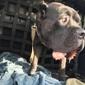 You Lucky Dog Day Care - Denver, CO